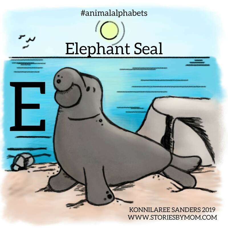 #letterE #animalalphabets #elephantseal #cute #goofy #animals #sealife #illustration #kidart #drawing #digitalart #storiesbymom #coloringpage