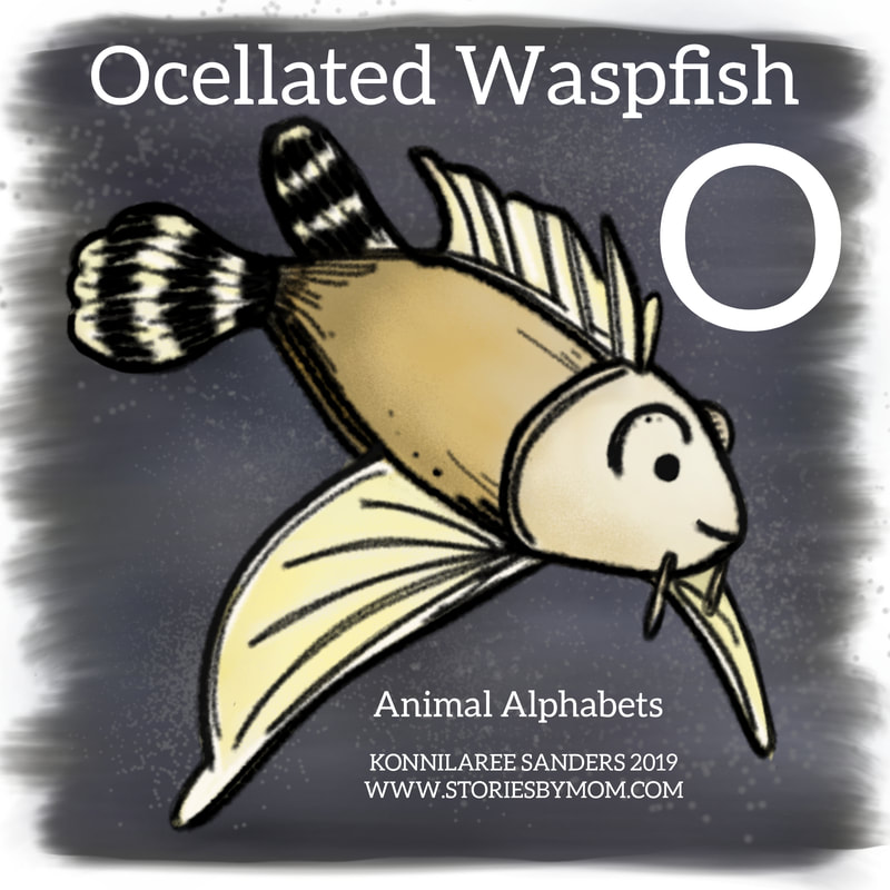 #animalalphabets #letterO #ocellatedwaspfish #seacreatures #ocean #animals #digitalart #illustration #processvideo #coloringpage #funfacts