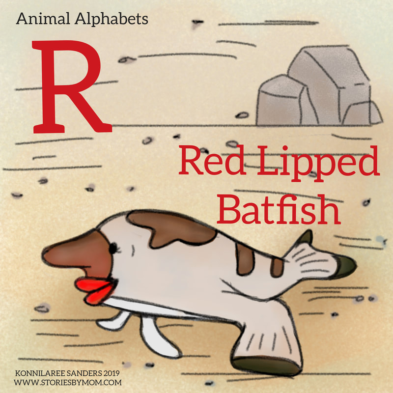 #animal_alphabets #letterR #redlippedbathfish #seacreatures #ocean #animals #illustration #digitalart #storiesbymom #coloringpage #processgif #funfacts